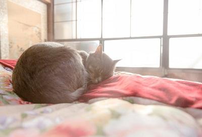 布団でぐっすり眠る猫