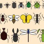 飲食店でゴキブリを見つけたらどうする?客席に出たときのスマートな対応
